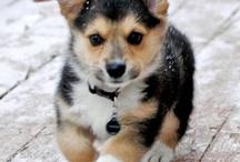 Beautiful animal photos.