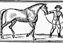 American Horse Racing