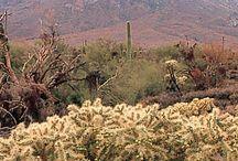 Arizona 2 / by Judith Cameron