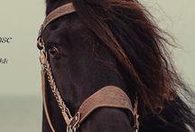 Horse shopping