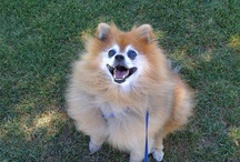 Dog Love (b/c I miss mine)