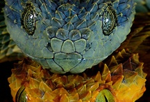 snakes / by Robert Savant