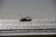 Seafood ships