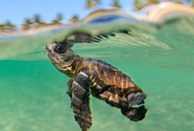 sea turtles in the oceans