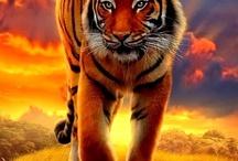Big &  Wild Cats
