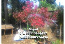 pohon taman