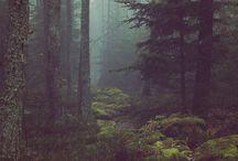 Florestas