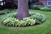 Strom- okolo vysadené listy