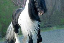 Άλογα