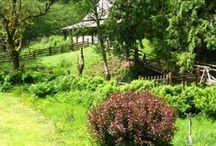Leaping Lamb Farm - Views Around the Farm