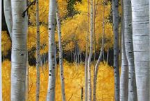 trees / by Connie Parks Squires