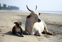 Animals / Photos of Animals from Travellers around the world