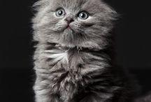 Kissat ja koirat / animals