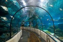 Aquarium / by A