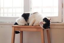 Fat cats that r cute