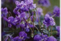 Violette / La collection d'accessoires 'Violette' by Rue Mouffetard