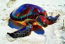 animali più belli del mondo