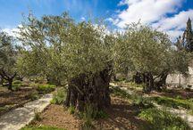 Puisto Jerusalemissa
