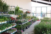 Lawn & Garden / It's time! Pick up your vegetable plants at Sparr Building and Farm Supply and start your garden today!