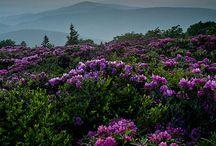 landscape, flowers