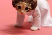 Cats! Cats! Cats! / Because cats yo,