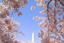 Travel - Washington DC