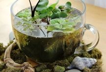 Terraniums and water gardens / by Stacy Burks