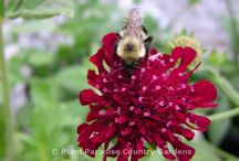 Perennials that Attract Beneficial Insects