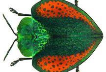 Insectarium / El fascinante mundo de los insectos