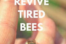 natural beekeeping / For bees, not for their honey