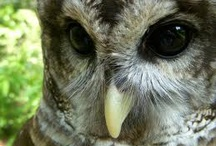 Owls / by Red Persimmon Imports - Katrina Ulrich