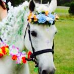 Horses and fancy dress