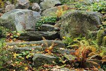 Autumn in Vaahteramäki 秋
