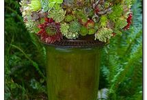 Succulents!!! / by Lori Purvis