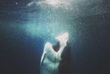 squali,jaws