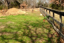 New Enclosures - Beginning to End  / New Space! / by PrideRock Wildlife Refuge