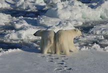 ★ Polar bears ★