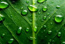 πράσινο,πράσινο