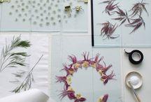 Herbarium, torkade blommor