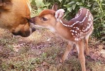 Beautiful animals! / The sweetest most gorgeous things...
