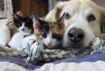 Pets / by Debra Mikalauskas