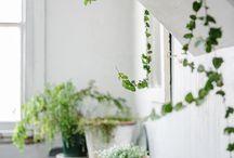 Kert a házban - Garden in the House