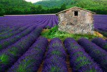 Colors: Lavender! / by Aimee Loker