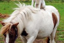 I Horse end puppy's / Bobbie en Spooner