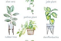 Plants ♡