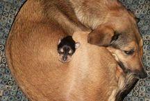 I love Animals / by Carolyn Heissner-Wahrenberger
