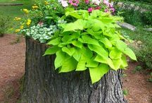 Tree Stump Planters / In this board we share some creative Tree Stump Planter ideas. Click follow to get inspired.