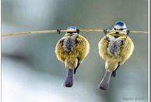 """""""Birds of a Feather......"""" / by Diana McNeilly"""