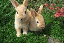 Cool rabbit stuff