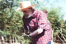 Moringa News / Articles and News related to the miracle plant, Moringa!